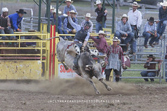 IMG_9242AW (Jaclyn Kavanagh) Tags: horse cowboy country australia bull rodeo outback cowgirl steer bullriding dungog steerwrestling barrelracing dungogrodeo steerwrangling jaclynkavanaghphotography dungogrodeo2016