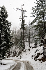 Snowfall on Rohtang Road (_DSF6778) (Param-Roving-Photog) Tags: road trees portrait snow storm ice landscape march snowfall heavy slippery manali himachal winters rohtang gulaba