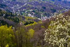 La valle di Osiglia (bormanus_sv) Tags: trees italy white verde green primavera alberi canon spring liguria valle bianco osiglia velley verdeggiante italiadelnord altavallebormida vallemorbida
