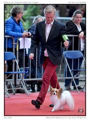 DSC_7250 (animalpicture.fr) Tags: de nikon canine exposition internationale centrale limoges d300 2016
