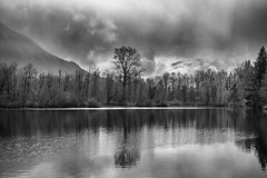 That Tree (writing with light 2422 [not pro}) Tags: trees blackandwhite bw lake monochrome landscape washingtonstate mountsi thattree lakeborst sonya77 richborder