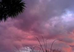Coloured Clouds at Sunset (Climate_Stillz) Tags: sunset clouds cloudy overcast pinksky pinkclouds eveningshot pastelcolours colouredsky nexus5