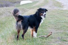 P1630198.jpg (Flemming Andersen) Tags: dogs water denmark spring outdoor hund dk hurup thistedmunicipality hurupthy helligsvej hebojebi