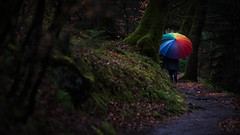 Walking in the Woods (sfp - sebastian fischer photography) Tags: nature rain forest umbrella landscape natur landschaft regenschirm pflzerwald baddrkheim humanelement neustadtanderweinstrase dxofilmpack5