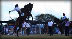 Ale Borda (Eduardo Amorim) Tags: horses horse southamerica argentina criollo caballo cheval caballos sauce cavalos corrientes pferde cavalli cavallo cavalo gauchos pferd chevaux gaucho amricadosul gacho amriquedusud  gachos  sudamrica suramrica amricadelsur sdamerika crioulo caballoscriollos criollos jineteada  americadelsud gineteada crioulos cavalocrioulo americameridionale caballocriollo eduardoamorim cavaloscrioulos provinciadecorrientes corrientesprovince cavall