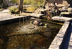 Almost bull's eye (blondinrikard) Tags: travel water japan pond kyoto coins frog wishingwell tenryji