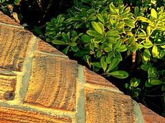 Diagonal (camus agp) Tags: espaa plantas panasonic ladrillos marbella pittosporum fz150
