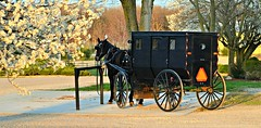 Spring in Amish Country (forestforthetress) Tags: trees horse color spring nikon outdoor amish buggy horseandbuggy arcola amishbuggy omot enjoyillinois