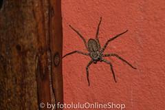 Argentinien_Insekten-58 (fotolulu2012) Tags: tierfoto