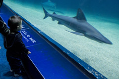 valencia 2016-122 (hiroke636) Tags: valencia mar peces oceano oceanografic