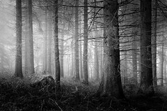 On the edge (Aidan Mincher) Tags: wood trees blackandwhite mist tree fog woodland landscape rocks heather yorkshire canon5dmk3 boleedgeplantation