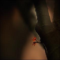 F_DSC2013-3-Nikon D800E-Nikkor 28-300mm-May Lee  (May-margy) Tags: tree leaves taiwan trunks  taipeicity       repofchina maymargy nikkor28300mm nikond800e maylee  mylensandmyimagination  naturalcoincidencethrumylens  linesformandlightandshadows  fdsc20133