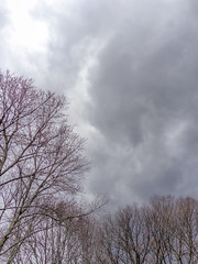 DSC02053 (johnjmurphyiii) Tags: sky usa clouds yard connecticut shelly cromwell originaljpeg johnjmurphyiii 06416 sonycybershotdsch90