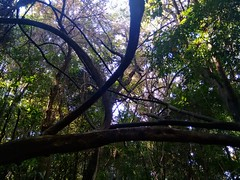 4 (Alexandra Deitos) Tags: parque brasil landscape sopaulo natureza sp tronco mata rvores trilha arlivre atlntica alfredovolpi
