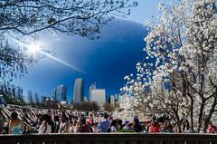 DSC_1109 edited-174 (pattyg24) Tags: people chicago skyline cloudgate thebean starmagnolia milenniumpark