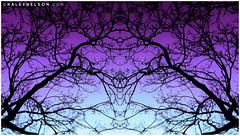 Transcendence (kaleynelson) Tags: trees abstract tree nature landscape meditate symmetry mirrored symmetric symmetrical meditation psychedelic spiritual chakra chakras alexgrey sacredgeometry kaleynelson