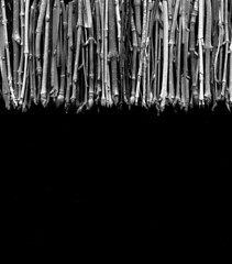 57251.02 twigs (horticultural art) Tags: blackandwhite bw line stems buds twigs branchtips horticulturalart