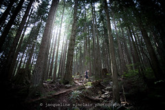 Final Walk (Jacqueline Sinclair) Tags: trees dog pet sun canada nature vancouver forest shine hike trail owner