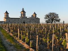 """Sunset sur Cos d'Estournel (Daniel Biays """" VOIR MON PROFIL """") Tags: sunset vignes vignoble chteau saintestphe gironde mdoc chteaucosdestournel"""