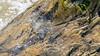 océano, palma, aerosol y algas (rey perezoso) Tags: 2018 caribe ocean palma texture water reflections hispaniola quisqueya beach playa ellimón samaná green nature naturallight dof palmtree caribbean mar atlantic