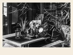Un petit somme (Napafloma-Photographe) Tags: 2018 architecturebatimentsmonuments bandw bw bâtiments france géographie hautsdefrance letouquet métiersetpersonnages pasdecalais personnes techniquephoto blackandwhite boutique monochrome napaflomaphotographe noiretblanc noiretblancfrance photoderue photographe province streetphoto streetphotography fr