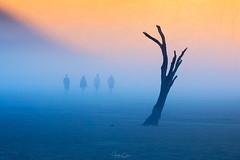 The Walking Dead (Hilton Chen) Tags: surreal sossusvlei landscape sunrise sanddunes mist namibia people camelthorntrees deadvlei fog namibnaukluftnationalpark silhouette minimalist ethereal hardapregion na