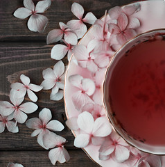 (donna leitch) Tags: tea cup saucer petals hydrangea stilllife macro