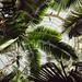 Palm Dome, Como Conservatory, St. Paul 5/18/18 #comozoo #mysaintpaul