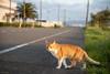猫 (fumi*23) Tags: ilce7rm3 sony 85mm fe85mmf18 sel85f18 animal feline neko cat chat katze gato harbor road bokeh dof a7r3 emount ねこ 猫 港 ソニー