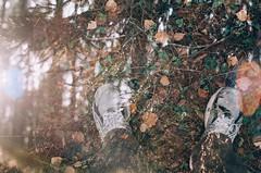 On my way (IvanTerekhov) Tags: lomography lomo analog 35mm buyfilmnotmegapixels film analogphotography filmfilmforever filmcommunity filmphotography filmlove doubleexposure luckyfilm exposure city forest multipleexposure nature water wood people photo filmdiary olympus olympusom zuiko 50mm 50mmlens