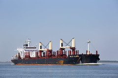 BELLE PLAINE (angelo vlassenrood) Tags: ship vessel nederland netherlands photo shoot shot photoshot picture westerschelde boot schip canon angelo walsoorden cargo belleplaine bulker