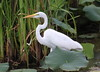 IMG_5833 (im2fast4u2c) Tags: national wildlife refuge | texas anahuac
