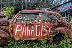 Photographers Paradise (Ed Rosack) Tags: iphone usa georgia tree car junkyard ©edrosack oldcarcity automobile antiquesandcollectibles mirrorlessminutesfocusonatlanta white