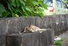 猫 (fumi*23) Tags: 85mm a7r3 a7rⅲ ilce7rm3 alpha cat chat fe85mmf18 feline gato katze miyazaki neko sel85f18 sony street ねこ ソニー 宮崎 猫 路地 butterfly emount