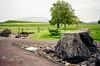 Botanic Gardens Of Wales AF5 KCPLUS 26.05.2018.2018 002 (Nigel Cliff) Tags: bosherston botanicgardensofwales kodakcolourplus200 pembrokeshire ricohaf5 svr saundersfoot stgovanshead stackpole tenby