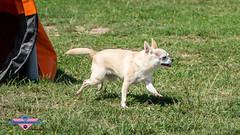 _DSC0760 (SeverX9) Tags: sony alpha 6500 70200gf4 dog run