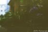 あじさいアンダーカバー (✱HAL) Tags: om1 lomography 400 color nega film chiba funabashi home hydrangea mistake