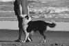 Cotidiano (luenreta) Tags: fauna 7dwf mascota love