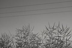 Stralsund bei Parow (tom-schulz) Tags: eosm3 carlzeissjenabiotar582 biotar582 outofcamera ooc stralsund thomasschulz monochrom bw sw raps linien