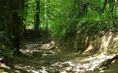 Rocky road... (Blue Sky Pix) Tags: limestone boulders woods walking becareful rambling exercise keepingfir stoneymiddleton derbyshire peak district national park england summertime pentax