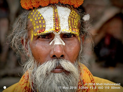 2014-11a Sadhus from Nepal 2018 (04) (Matt Hahnewald) Tags: matthahnewaldphotography facingtheworld character head face forehead painted sandalwoodpaste chandanam tilaka urdhvapundra eyes expression beard flower marigold consent respect dignity concept travel tradition religion brotherhood exotic ethnic spiritual religious traditional cultural holy hindu hinduism vaishnavism sadhu guru baba yogi kathmandu nepal indian oneperson male adult old man photo physiognomy nikond3100 primelens 50mm 4x3 horizontal street portrait closeup cropped yellow outdoor color vignette posing iconic authentic dignified ramdas durbarsquare faceshot nikkorafs50mmf18g lookingcamera clarity fullfaceview