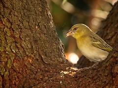 munchies (peet-astn) Tags: bird food birdfood tree beak evening light garden