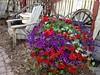 Okotoks Old Towne (Mr. Happy Face - Peace :)) Tags: spokes floral hbm theme emptyseats