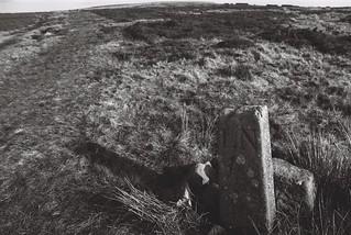 10 Boundary stone, Beamsley Moor