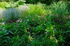 Jardin botanique de Pellinec (claude 22) Tags: jardindepellinec pellinec penvénan 22710 bretagne france breizh brittany jardinremarquable jardinverdure nature plantes verdure natural claude22 iris ensata