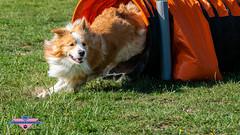 _DSC0109 (SeverX9) Tags: sony alpha 6500 70200gf4 dog run