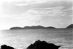041269 30 (ndpa / s. lundeen, archivist) Tags: nick dewolf nickdewolf blackwhite photographbynickdewolf bw 1969 1960s 35mm film monochrome blackandwhite april usvi virginislands usvirginislands stthomas caribbean coast water ocean watersedge beach bay hullbay rocks rocky island brassisland innerbrassisland outerbrassisland bird birds sky clouds sea