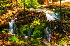 (Steven Barrows) Tags: cascade stream waterfall water yosemitenationalpark yosemite nationalpark usnationalpark hiking backpacking johnmuirtrail moss ngc