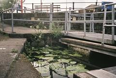Water lilies in the Harbour (knautia) Tags: floatingharbour bristol england uk may 2018 film ishootfilm olympus xa2 fuji superia 400iso olympusxa2 nxa2roll17 waterlilies waterlily harbour docks commute commuting