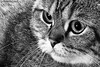 KENT (aika217) Tags: cat canon tabby whiskers eyes animal pet portrait eos 77d efs18135mm f3556 is usm